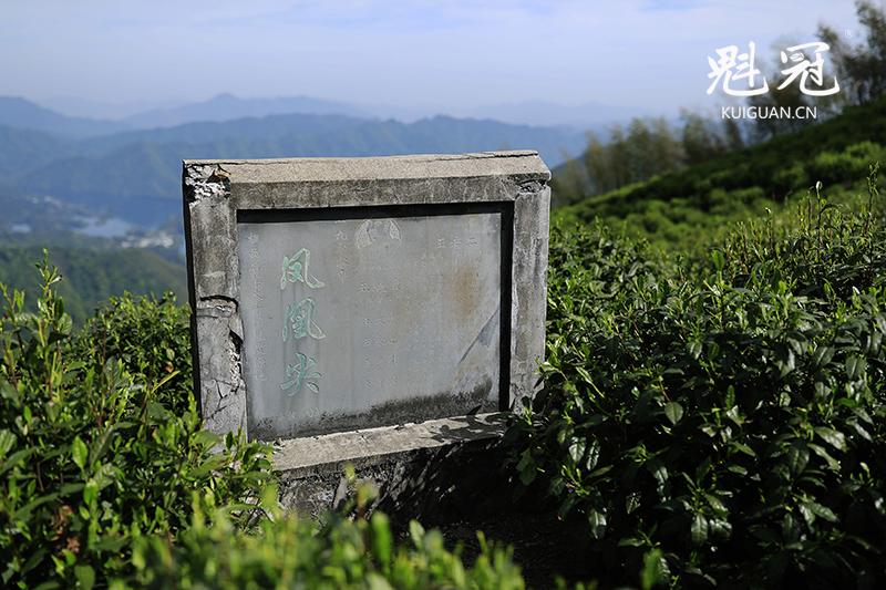 太平猴魁茶园-凤凰尖